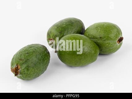 Whole Acca sellowiana (Feijoa) fruit - Stock Image