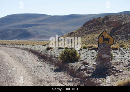 The Bolivian Altiplano Landscape with Vicuñas - Stock Image