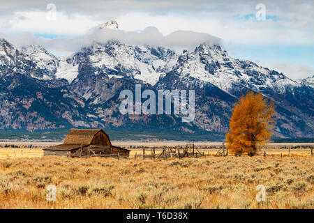 John Moulton historic barn, Mormon Row, Grand Teton National Park, Wyoming, USA - Stock Image