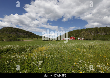A red wooden house is surrounded by flowering meadows in spring. - Stock Image
