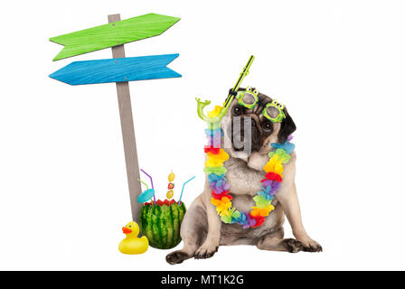 cute smart pug puppy dog sitting down with watermelon cocktail, wearing hawaiian flower garland, goggles and snorkel, next to wooden signpost with arr - Stock Image