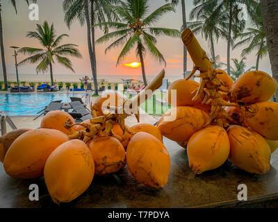 Beach scene, at Negombo, Sri Lanka, sunset, king coconut - Stock Image