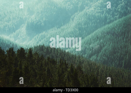 nature background of forest with layers of trees - Stock Image