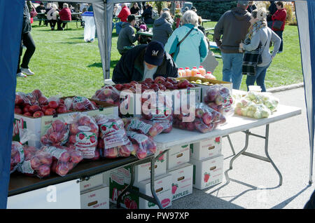Two Rivers, Wisconsin USA, 13th Oct, 2018. Careful shopper examines apples offered by vendor at  Two Rivers Annual Autumn Applefest. Credit: Jerome Wilson/Alamy Live News - Stock Image