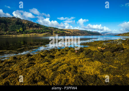 View to the east of beautiful Loch Sunart and its seaweed covered shoreline in the Highlands of Scotland - Stock Image
