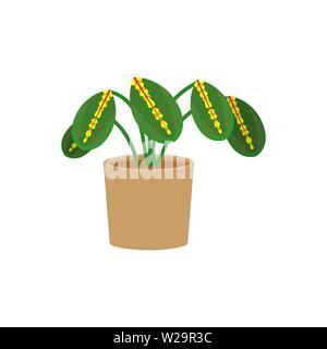 Maranta potted flat icon, indoor plant, flower vector illustration isolated on white background - Stock Image