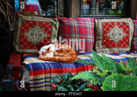 Ginger and white cat sleeping on a colourful blanket and cushions, with greenery in the foreground - Stock Image