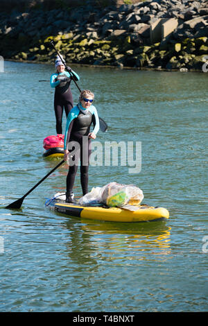 Two adult women on stand up paddleboards voluntarily taking part in  a river clean , picking up plastic  and other types of rubbish, organised by Aberystwyth Beach Buddies / Gwerin y Glannau along the river Rheidol in Aberystwyth, Wales UK - Stock Image