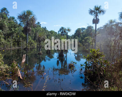 Mato Grosso State, Brazil. Amazon forest and water alongside the MT322/BR80 road. - Stock Image