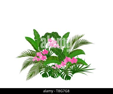 Set, bouquet. Green tropical leaves of banana, coconut, monstera and ogawa. Pink Orchid. illustration - Stock Image