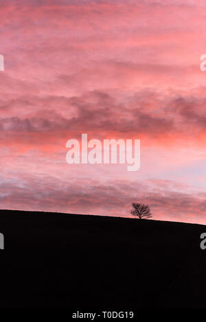 A tree silhouetted against the colourful sky at daybreak in the Dorest countryside. - Stock Image