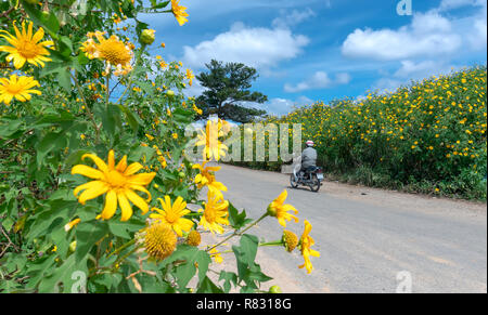 The farmers are driving motorbike at path of countryside, bush of wild sunflower bloom in yellow, colorful scene beautiful nature - Stock Image