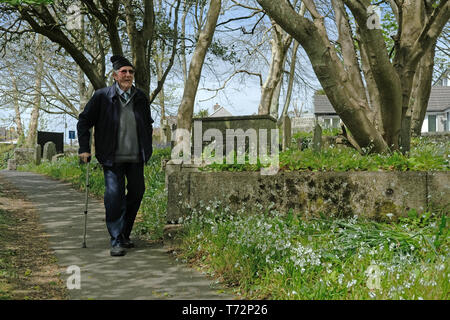 An old man walking through a churchyard in the spring sunshine. - Stock Image