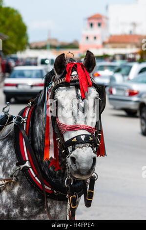 Aegina is one of the Saronic Islands of Greece in the Saronic Gulf. Horse cab. - Stock Image