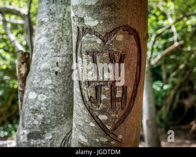 Heart shaped carving in tree - Stock Image