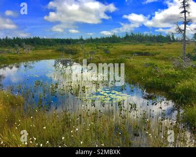 Pond on hike in Newfoundland Canada - Stock Image