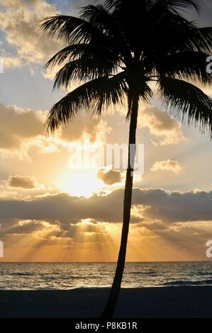 Colorful, partially cloudy orange sunset with sun rays piercing the clouds over the Atlantic Ocean with silhouette of palm tree, Florida, USA. - Stock Image