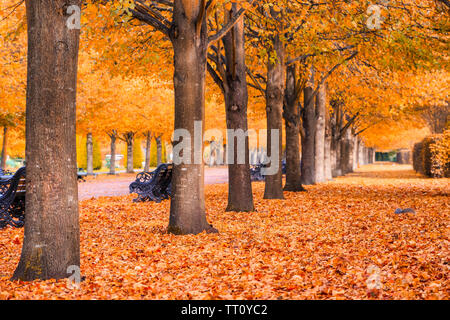 Beautiful autumnal scenery of tree tunnel in the Regent's Park of London - Stock Image