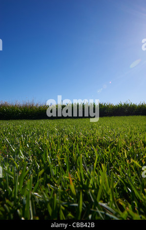 Luscious green grass sunny blue sky - Stock Image