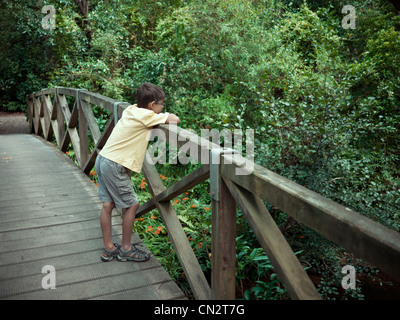 Boy looks into forest from wooden bridge. - Stock Image