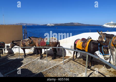 Donkeys on the Greek island of Santorini, a method of getting from the old port to the town of Thira on the clifftop. - Stock Image
