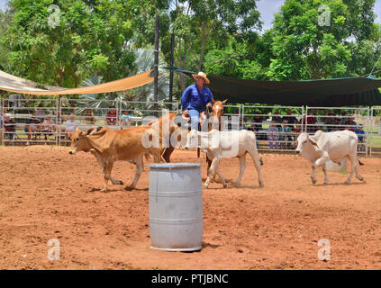 Tom Curtain the singing cowboy performing rounding up Steer in his Outback Experience show in Katherine, Northern Territory, Australia - Stock Image