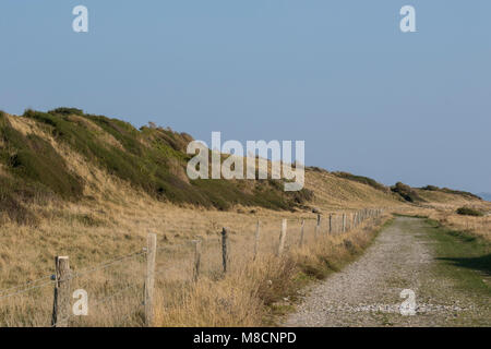 Skansevej on the southern tip of Sejrø with windblown shrubs and trees - Stock Image