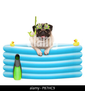 happy summer pug dog with goggles and snorkel, on vacation, in inflatable pool, isolated on white background - Stock Image