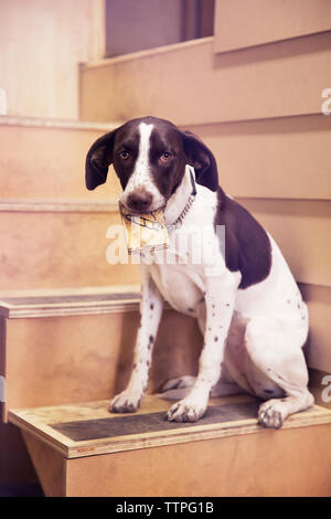 Dog holding paper in mouth sitting on steps - Stock Image