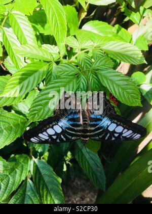 Beautiful butterfly garden - Stock Image