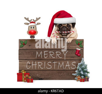 cute Christmas pug puppy dog and rednosed reindeer behind old wooden board, decorated with presents and cookies, - Stock Image