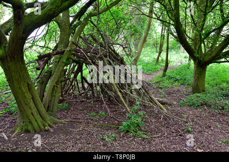Children's den made from fallen branches in woods by path - Stock Image