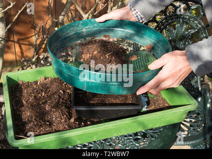 Amateur gardener using riddle to fill a seed tray with sieved leaf mould, England, UK - Stock Image