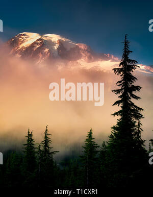 Fog trees and Mt. Rainier. Mt. Rainier National Park, Washington - Stock Image