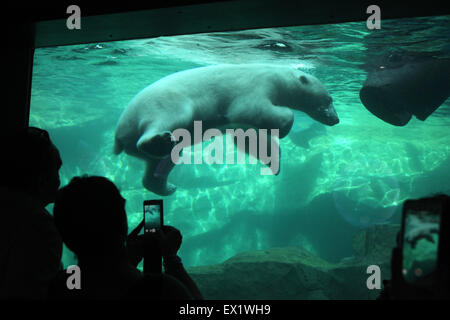 Visitors look as a polar bear (Ursus maritimus) swimming underwater at Schönbrunn Zoo in Vienna, Austria. - Stock Image