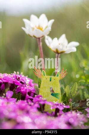 Spring Tukoni - Stock Image