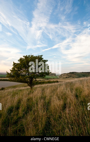 The Chilterns - Stock Image