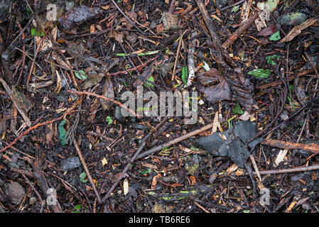 Partially decomposed green garden waste, removed from a compost bin. - Stock Image