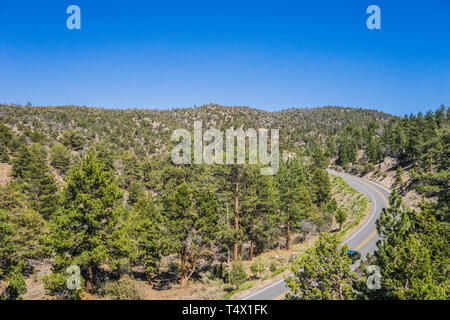 Forest of mountain pine trees stand alongside an empty highway in California. - Stock Image