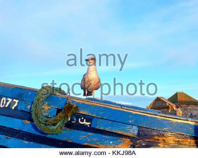 Morocco, Marrakesh-Safi (Marrakesh-Tensift-El Haouz) region, Essaouira. Fishing port at dawn. - Stock Image