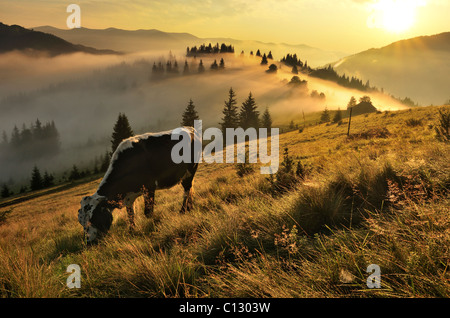 landscape in dzembronya area in ukraine at dawn - Stock Image