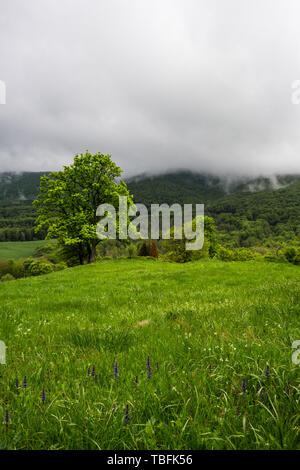 Dramatic moody clouds over forest, lonely green tree and meadow. - Stock Image