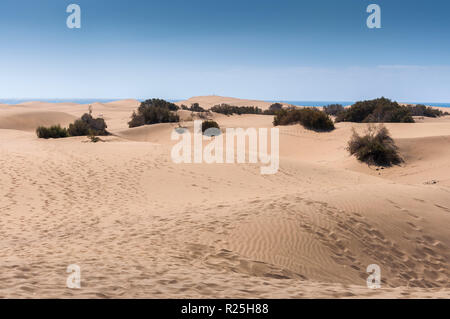 Coastal dunes in Maspalomas beach, Gran Canaria Island, Canary Islands, Spain. - Stock Image