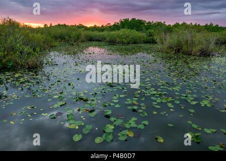 Wetlands river of grass at Anihinga Trail , Everglades National Park, Miami, Florida, USA - Stock Image