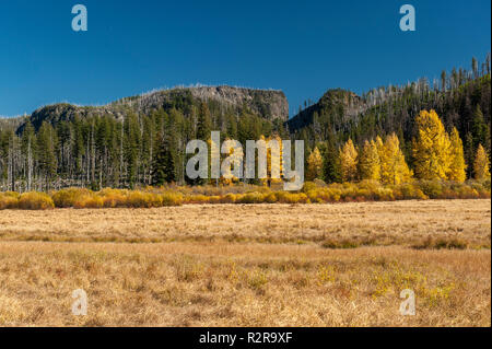 The meadow formerly known as Lost Lake, near the Santiam summit of the Oregon Cascades. - Stock Image