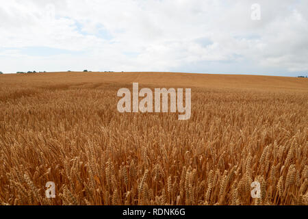 Rural landscape on cloudy day - Stock Image