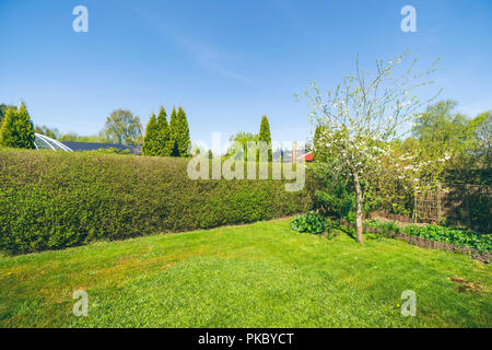 Garden with a lawn and a hedge under a blue sky in the spring - Stock Image