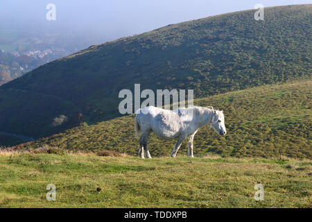 Horse on the hill tops, seen from The Long Mynd in the Shropshire Hills, UK. - Stock Image