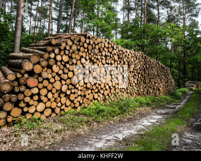 Pile of wood, fisheye view, forest near Celle, Germany - Stock Image