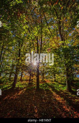 Sunlight bursting through the Autumn trees, Arundel, West Sussex - Stock Image